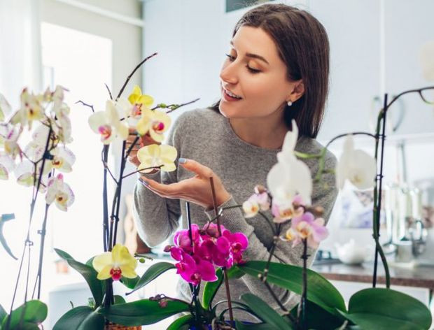 Oplemenite svoj enterijer - Nabavite orhideje