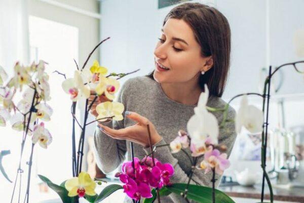 nega-orhideja-Gloria